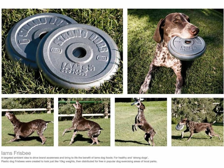 iams-frisbee-promotional-product